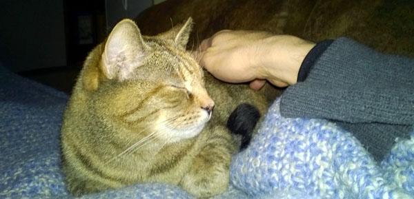 Love is a Cat Named Firestar