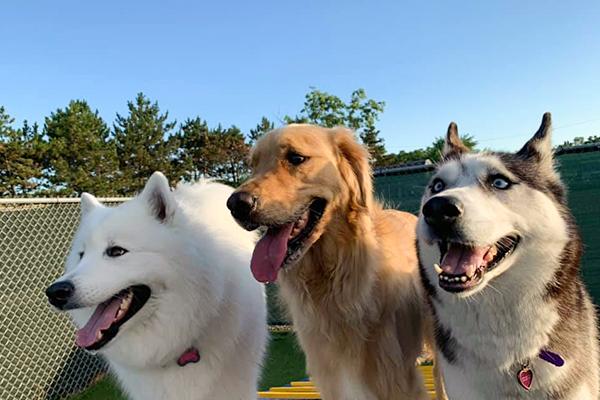 happy-dogs