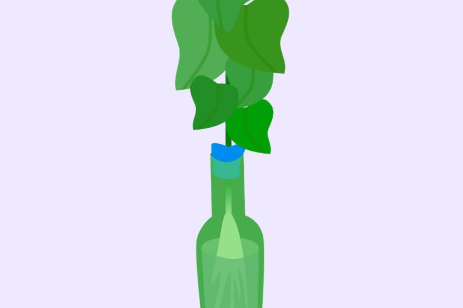 Soju Bottle Hydroponics