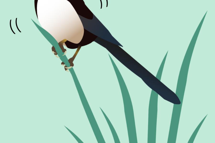 A bird sitting on grass