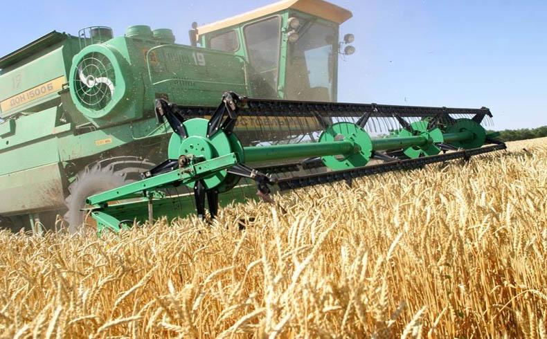 Según su primer ministro, las exportaciones agrícolas de Ucrania se incrementaron un 32 por ciento en seis meses