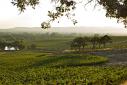 Napa Valley Wine Trip | The Naptime Chef