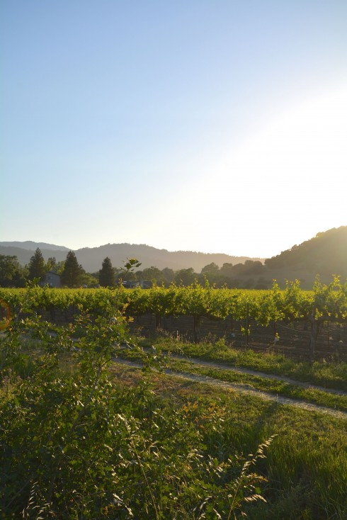 Napa Valley | The Naptime Che