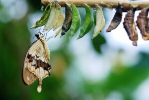 butterfly coming out of a cacoon - life changing event