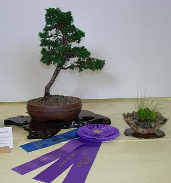 Best of Show and First Place, Needled Evergreen Class - 2007 Iowa State Fair, Shimpaku; Ivan Hanthorn
