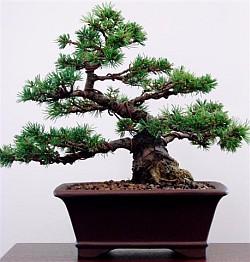 workshop_tree