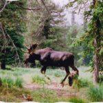 Idaho_County_Images_012