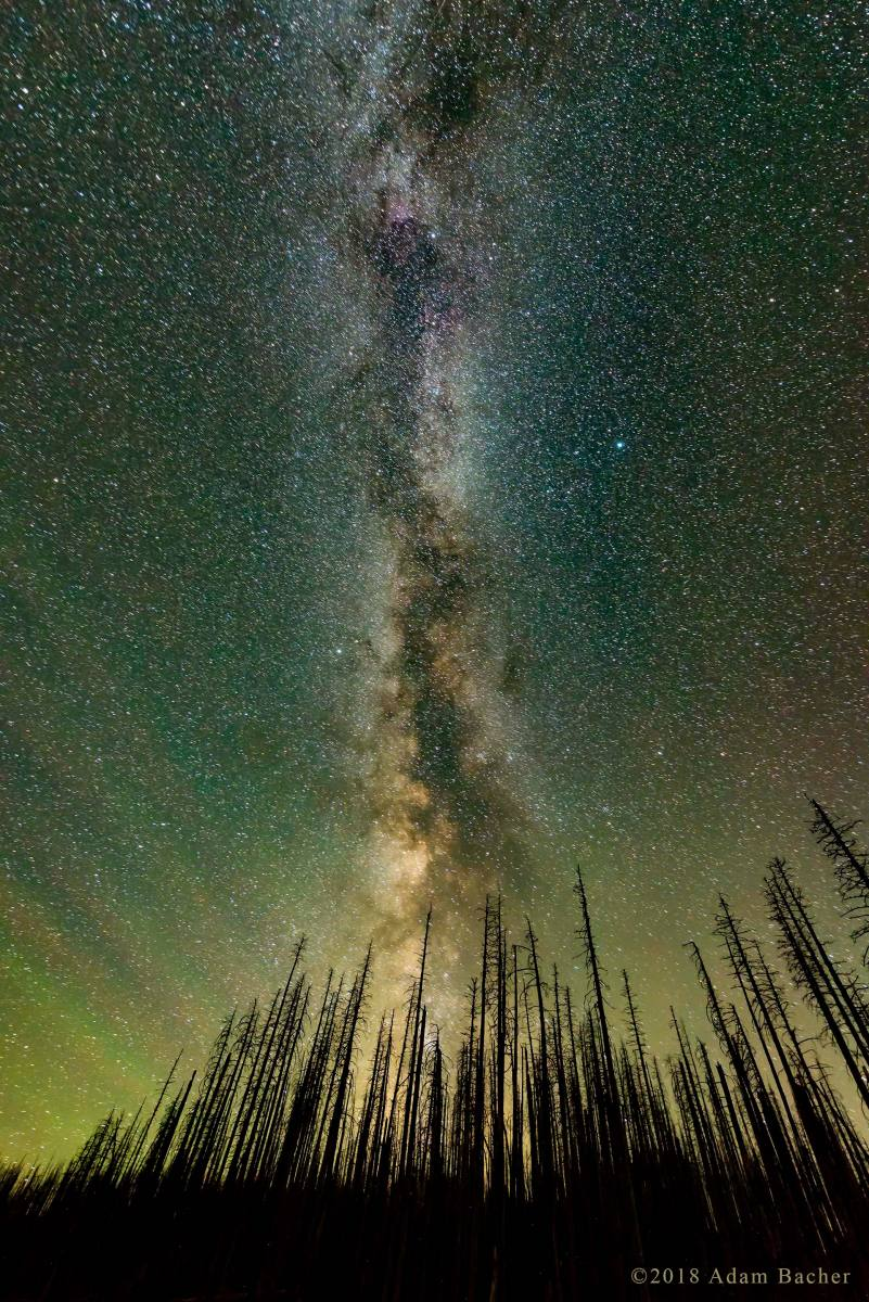 architecture of the universe: milky way night star photography,  tree snags from burn on mount hood, oregon, vertical