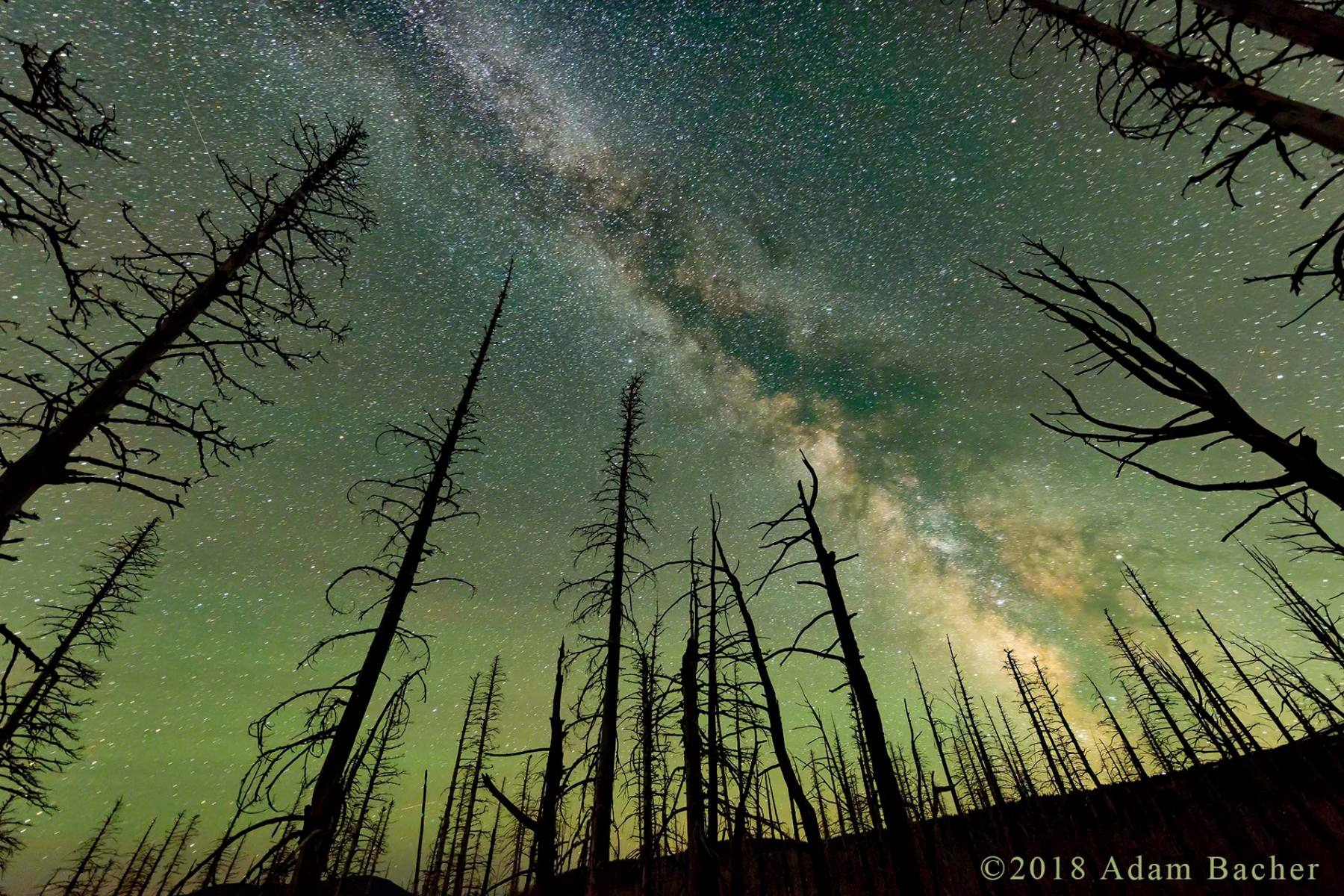 architecture of the universe: milky way night star photography,  tree snags from burn on mount hood, oregon