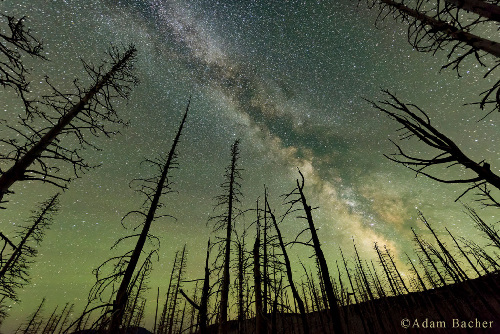 milky way and trees