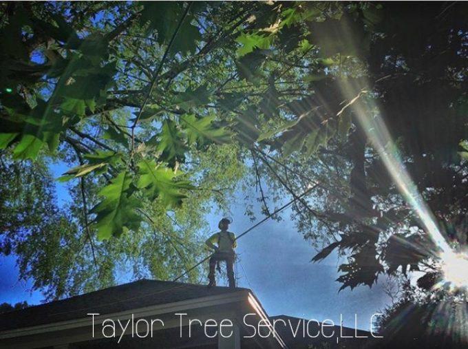 Tree Trimming Service Prattville, Millbrook, Wetumpka and Montgomery, AL