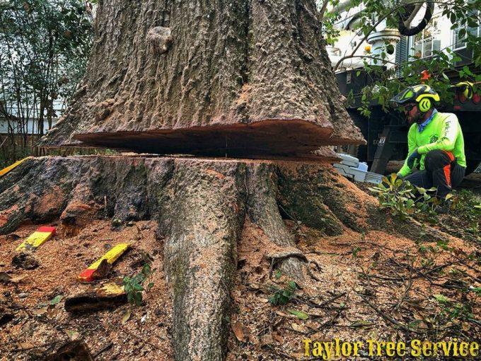 Taylor Tree Service provides professional tree removal for the entire Montgomery, AL River Region area.