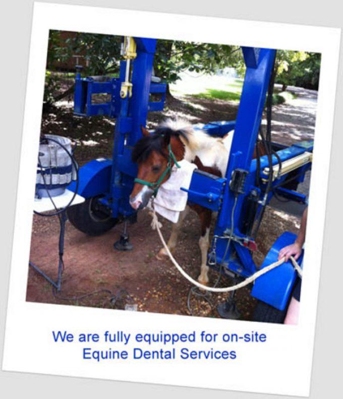 Equine Dental Services in Alabama