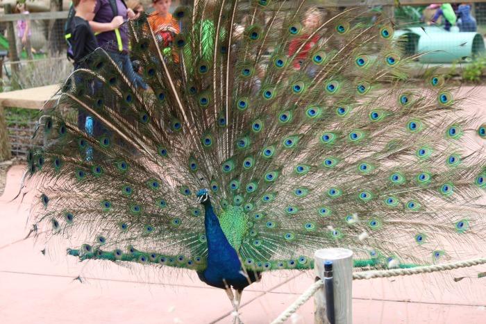 Cheyenne Mountain Zoo 1a #ad #visitcos