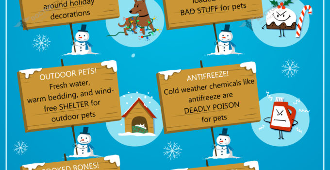 6 Winter Pet Safety Tips
