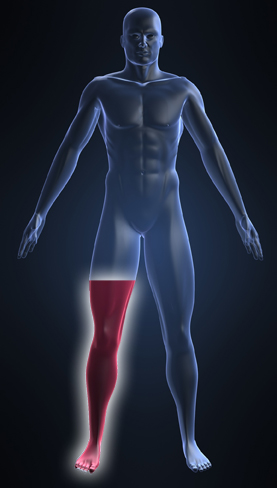 regenerative targeted muscle reinnervation