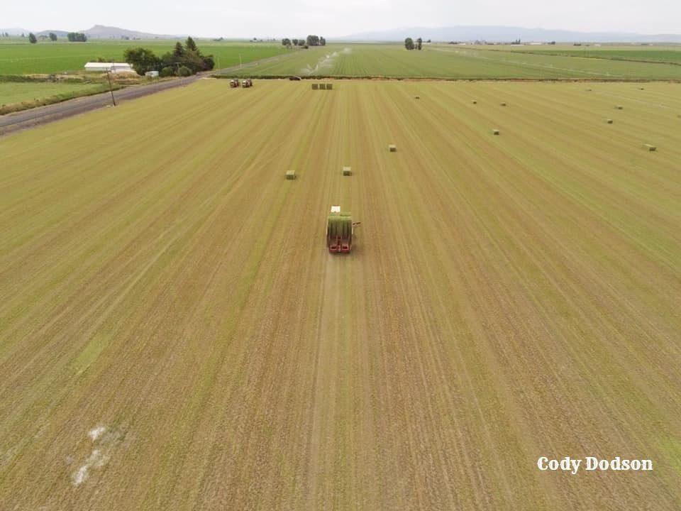 Bail wagon gathering hay