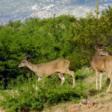 Academy Villas Assisted Living Deer