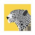 Jaguar 250 copy