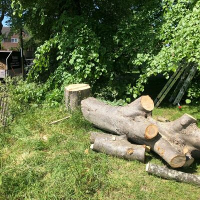 Tree Surgeon Surrey