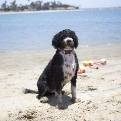 Miss Millie's Dog Rule Book - My PWD and Me