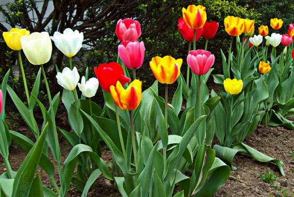 Safe For Plants & Flowers