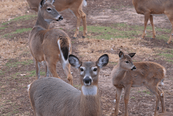 Reduce Deer Traffic
