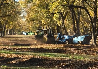 Tractors harvesting pecans