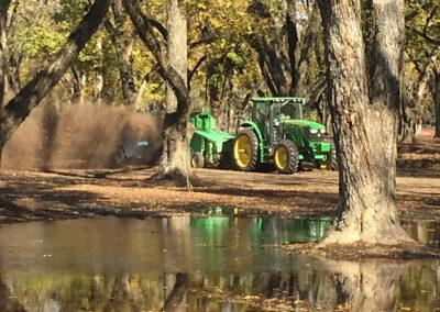 Green tractor harvesting pecans