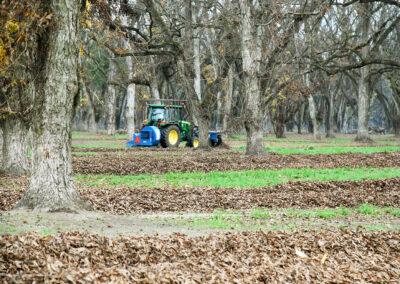 Tractor in pecan field during harvest