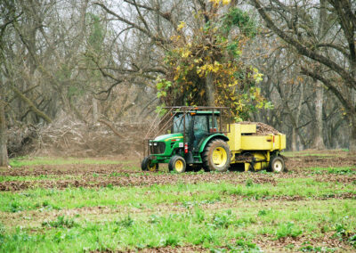Small tractor harvesting pecans