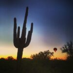Saguaro Cactus - hot air balloon