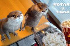 Otter Reaction to Popcorn Maker