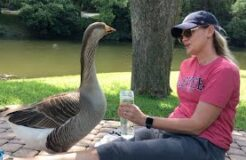 Lonely Goose Falls In Love With Woman. Then Things Get Weird.