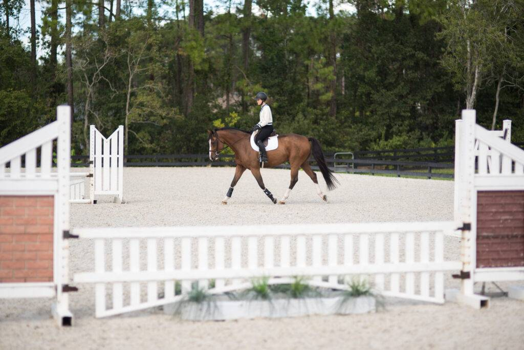 Putting Your Horse in a Frame