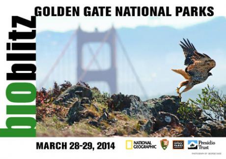 'Golden Gate National Parks Bioblitz' banner image