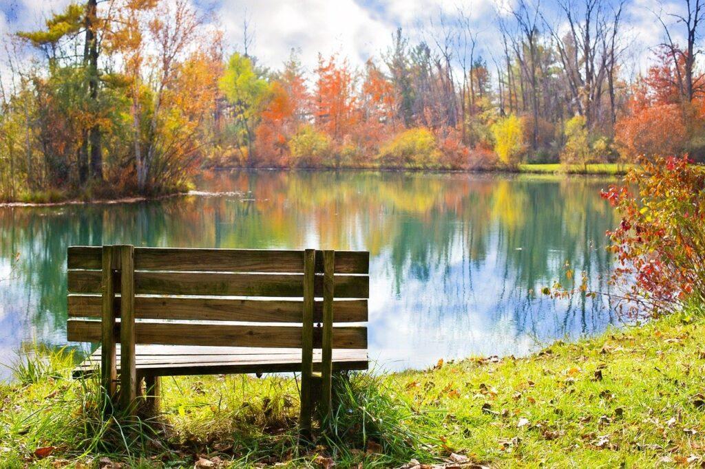 Wood bench overlooking pond