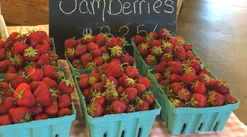 Strawberry Farms in Ohio