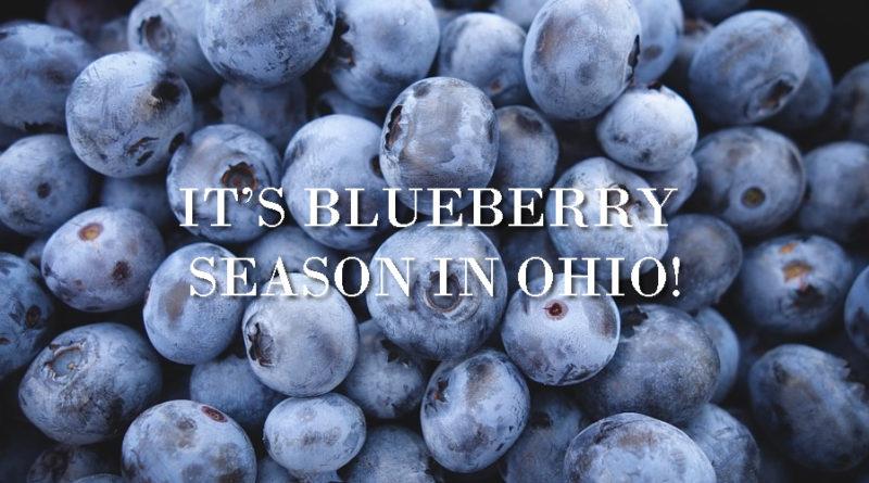 It's Blueberry Season in Ohio