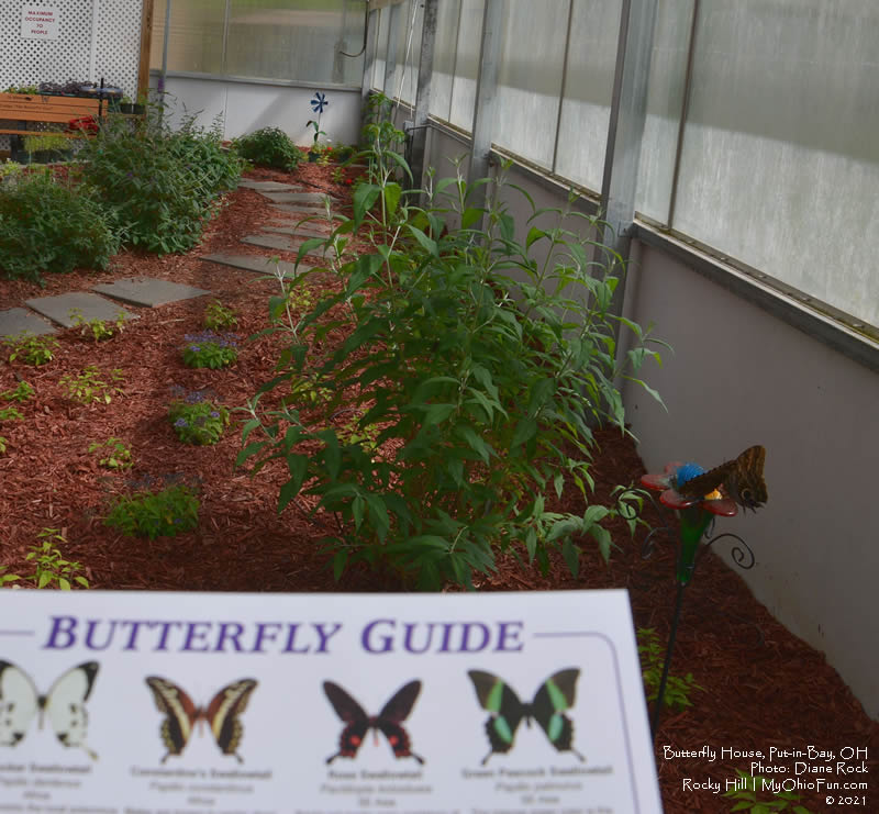 Butterfly House Put-in-Bay