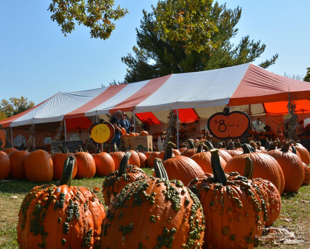 Dussell Farm Pumpkins