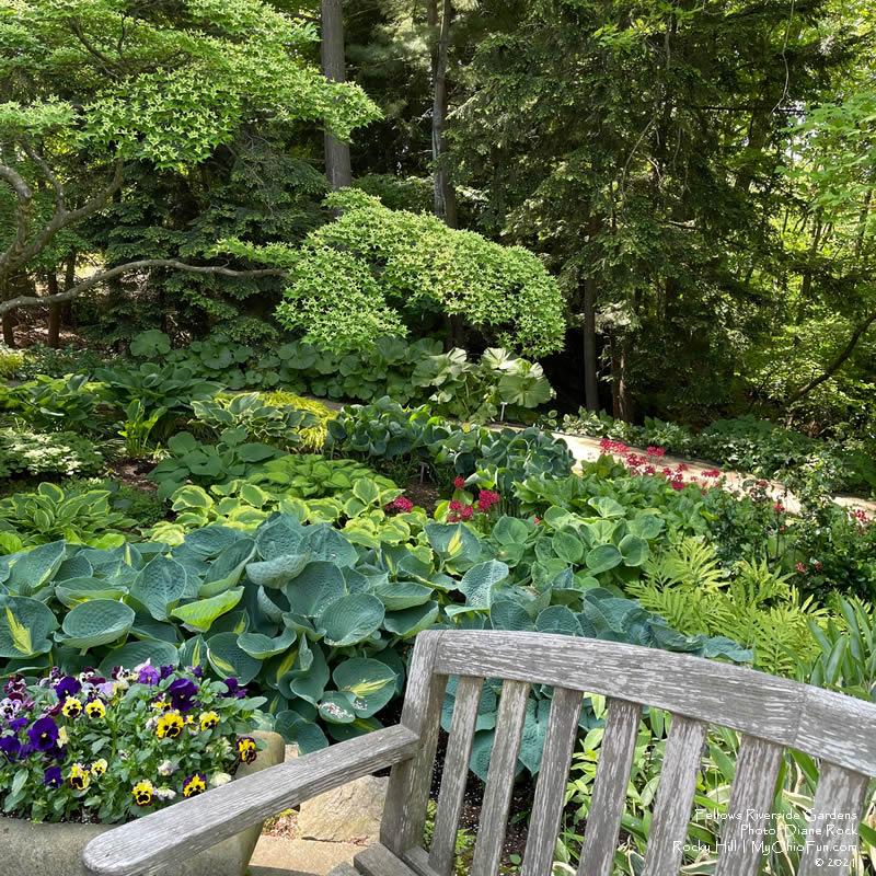 Shade Garden - Fellows Riverside Gardens