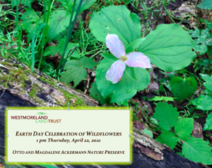 Earth Day Celebration of Wildflowers @ Otto and Magdalene Ackermann Nature Preserve