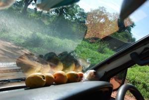Mangos on dashboard