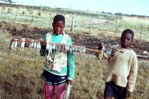 Boys after after a mice hunt on the outskirts of Lusaka the Capital City of Zambia.
