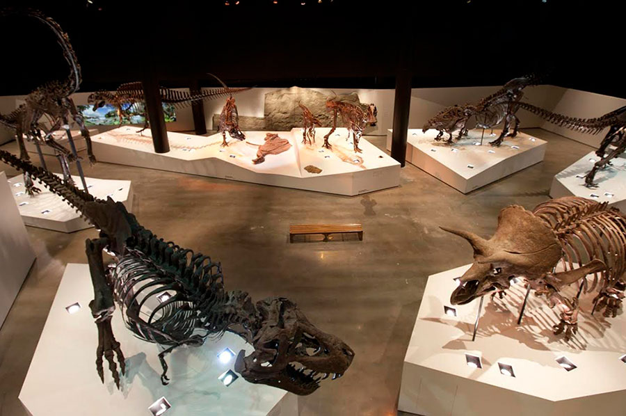 Dinosaurs at the Houston Museum of Natural Science (Houston Museum District