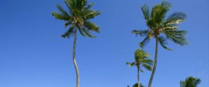 California palm trees - csf-cjsf.org