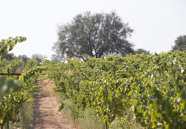 Twin Rocks Estate Winery Granite Bay California