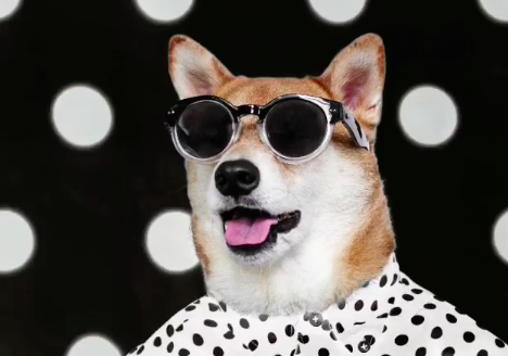 3 Dogs To Follow on Social Media for National Dog Day