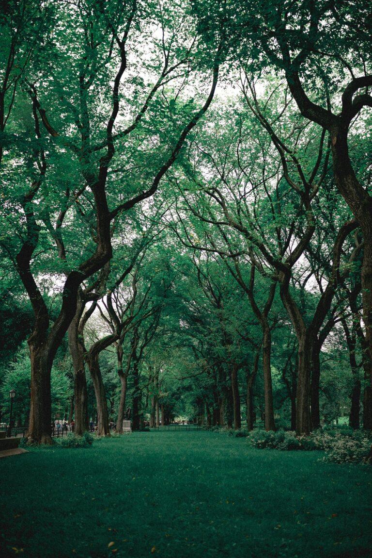 green-grass-near-trees-1770809
